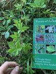 Parthenocissus quinquefolia by John Gadberry
